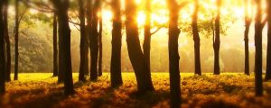 Live Events Stock Media - Sunlight Through Forest Trees 2