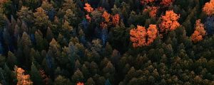 Live Events Stock Media - Autumn Aerials 08