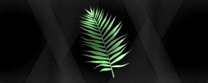 Live Events Stock Media - Palm Leaf 01