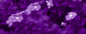 Live Events Stock Media - Purple Flower