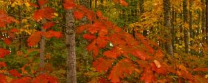 Live Events Stock Media - Fall Colors 1004
