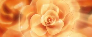 Live Events Stock Media - Yellow & Orange Colored Spinning Rose