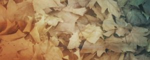 Live Events Stock Media - Fallen Leaves 06