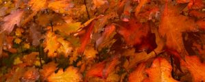 Live Events Stock Media - Fall Colors 1002