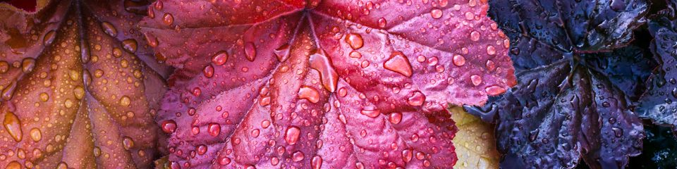 Stock Media - Colorful Wet Leaves