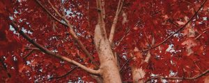 Live Events Stock Media - Fall Leaves 11