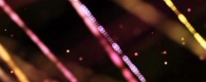 Live Events Stock Media - Pink, Purple & Yellow Bokeh Orb Strands