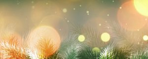 Live Events Stock Media - Christmas Vintage Firs
