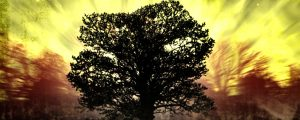 Live Events Stock Media - tree of life: gold