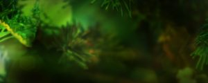 Live Events Stock Media - Green Pine