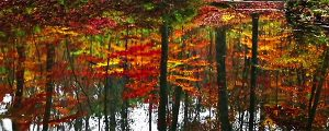 Live Events Stock Media - Yellowwood Forest Autumn Reflection Loop
