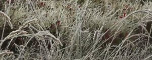 Live Events Stock Media - Frost on grass