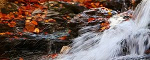 Live Events Stock Media - Falls and Fall Foliage Loop