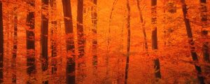 Live Events Stock Media - Sunlight Through Forest Trees 8