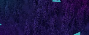 Live Events Stock Media - Dense Snowy Forest Triangles