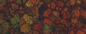 Live Events Stock Media - Autumn Colors Above