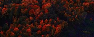 Live Events Stock Media - Autumn Aerials 02