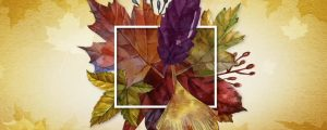 Live Events Stock Media - Thanksgiving Centerpiece 02