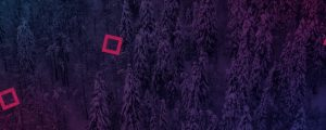 Live Events Stock Media - Dense Snowy Forest Squares