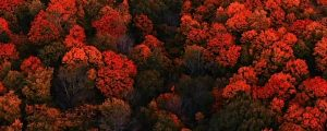 Live Events Stock Media - Autumn Aerials 09