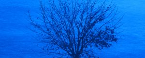 Live Events Stock Media - Tree 2 Blue