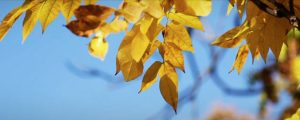 Live Events Stock Media - Fall Leaves on Blue Sky