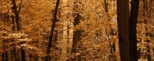 Live Events Stock Media - Autumn Leaves Montage Natural