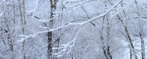 Live Events Stock Media - Snow on bare tree branches