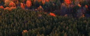 Live Events Stock Media - Autumn Aerials 07