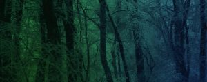 Live Events Stock Media - Blue Green Snowy Forest