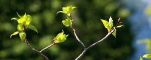 Live Events Stock Media - New Spring Leaves