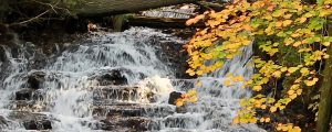 Live Events Stock Media - Autumn at Wagner Falls