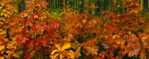 Live Events Stock Media - Fall Colors 1001