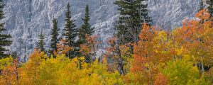 Live Events Stock Media - Autumn Trees and Mountain