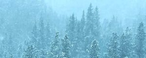 Live Events Stock Media - Forest Snowfall