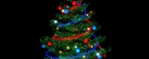 Live Events Stock Media - Christmas Trees 02 (No Background)