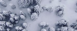 Live Events Stock Media - Pristine Snow Forest Aerial