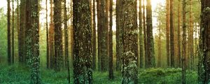 Live Events Stock Media - Sunlight Through Forest Trees 3