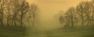 Live Events Stock Media - Misty Morning Trees 1