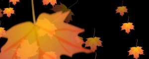 Live Events Stock Media - Autumn Leaves Falling Slowly