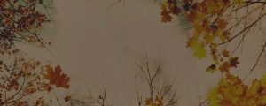 Live Events Stock Media - Autumn Colors Canopy