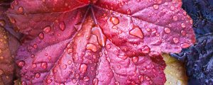Live Events Stock Media - Colorful Wet Leaves