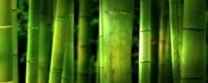 Live Events Stock Media - Bamboo Grove