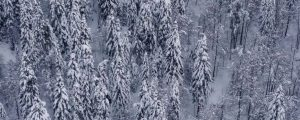 Live Events Stock Media - Dense Snowy Forest Natural