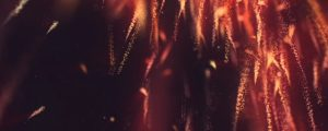 Live Events Stock Media - New Year Sparks Sparks
