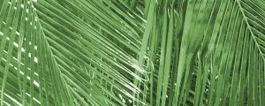 Live Events Stock Media - Green Palm Branches