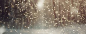 Live Events Stock Media - Christmas Forest Snow