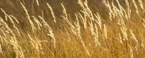 Live Events Stock Media - Autumn Grass