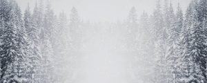 Live Events Stock Media - Majestic Snow Forest