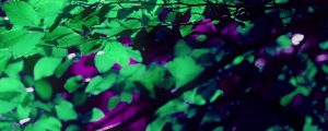 Live Events Stock Media - Purple Green Leaves Neon